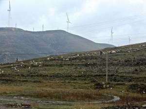 Bergers avec leurs moutons et éoliennes qui ne tournent pas rond dans le Shanxi (photo Harvey Mead, avril 2015)