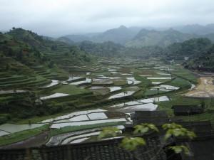 Vallée transformée en écosystème rizicole