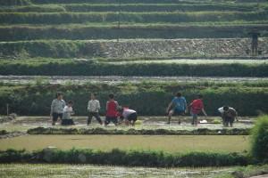 Enfants dans une rizière en Chine