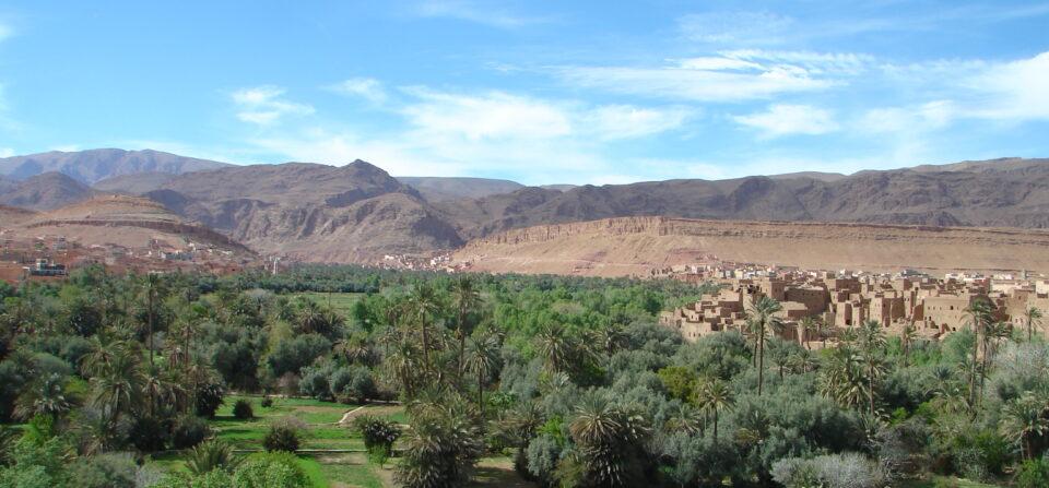 Palmeraies et désert
