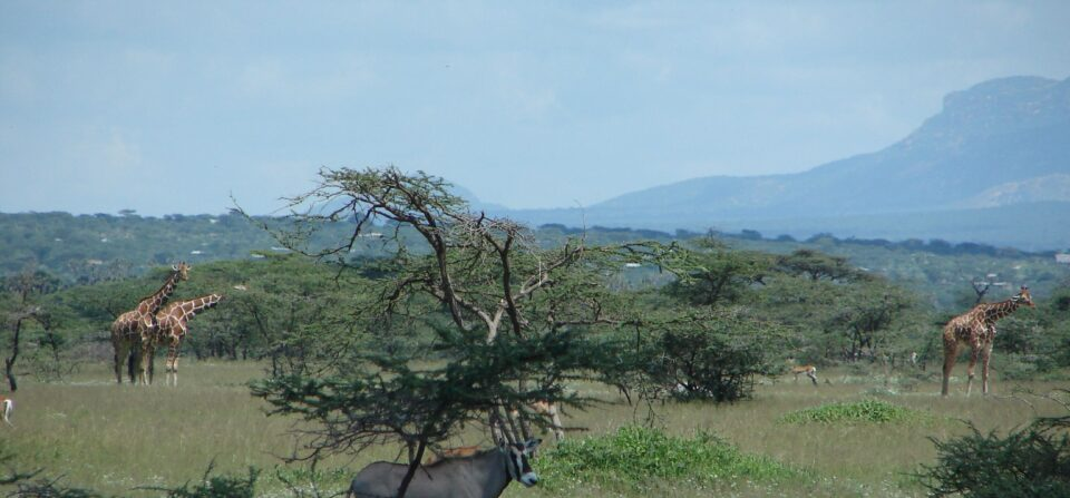 Grande faune et communautés humaines